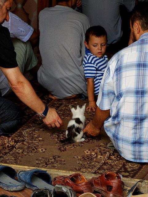 Petit chat dans la mosquée